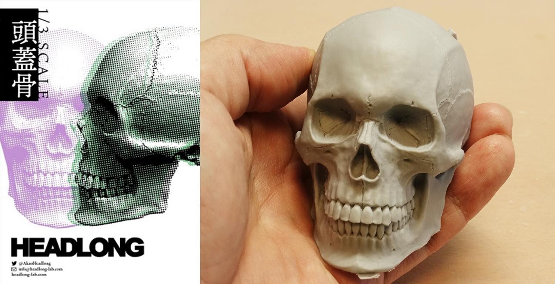 HEADLONG 1/3頭蓋骨